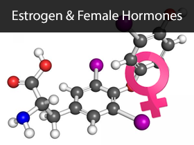 Estrogen and Female Hormones Medical Lectures