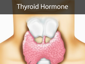Thyroid Hormone Medical Lectures